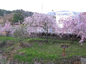 宮城野2.JPG