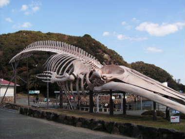 骨格標本~建物に入りきらないから屋外展示