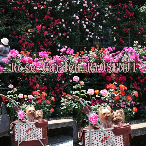 Rose Garden RYOSENJI