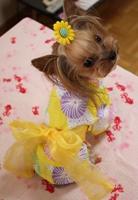 こはる黄色浴衣