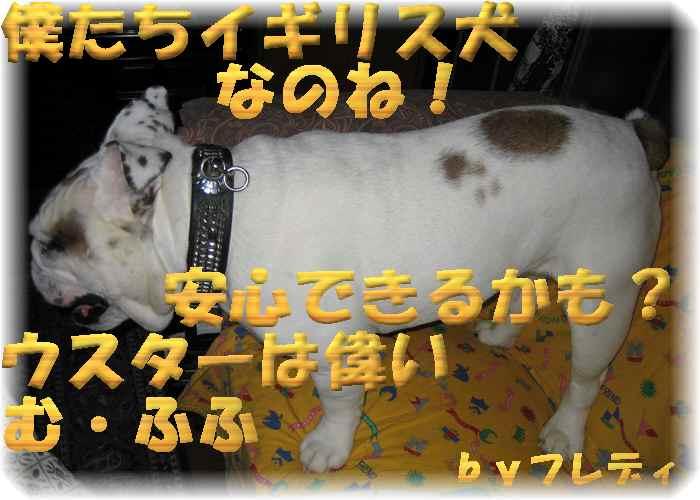 IMG_0005-1フレ安心.jpg
