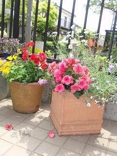 2011夏の花へ 007.jpg
