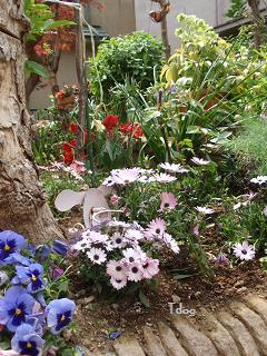 2011夏の花へ 009.jpg