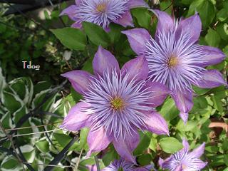 2011夏の花へ 011.jpg