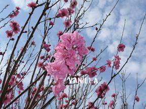 4月の花 006.jpg