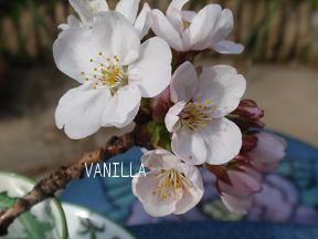 4月の花 019.jpg