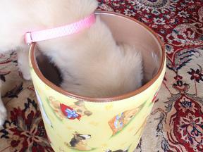 犬ゴミ箱5.jpg