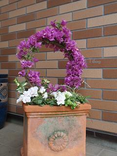 2011夏の花へ 004.jpg