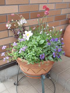 2011夏の花へ 005.jpg