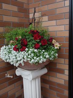 2011夏の花へ 006.jpg