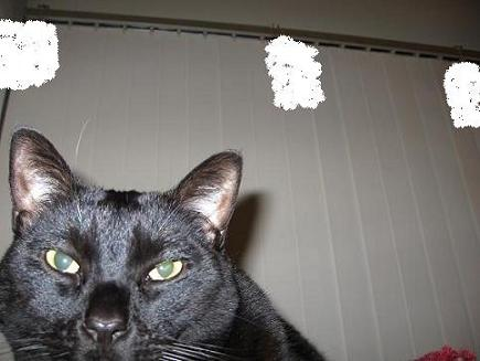 Ekkun-CloseUp@CatTree-Feb2007