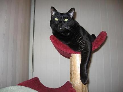 Ekkun@CatTree-Feb2007-#1