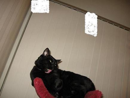 Ekkun@CatTree-Feb2007-#2