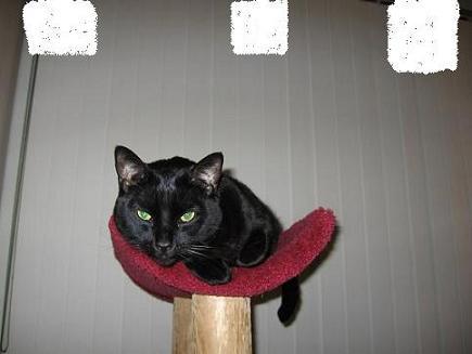 Ekkun@CatTree-Feb2007-#3
