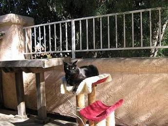 Ekkun@CatTree-Outside-Dec2006-#1
