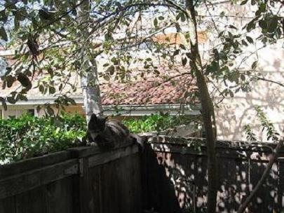 Neighbor'sCat-#1-Nov2006