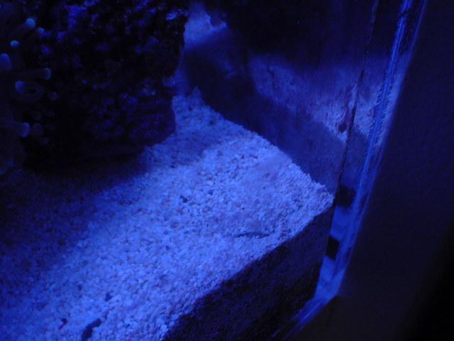 あさり砂に潜る02