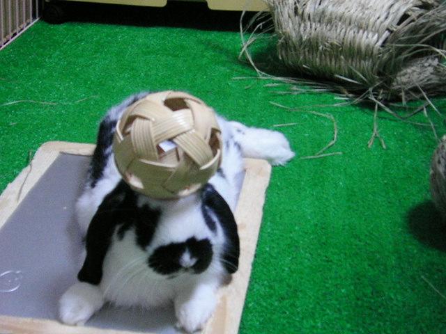 ボールのっけ