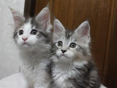non_kitten_11