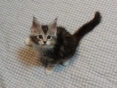 non_kitten_12