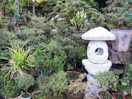 日本でいう盆栽もあります
