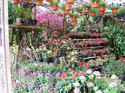 カラフルな花々!