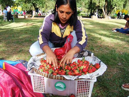 こんな感じでイチゴ売りのおばさんが