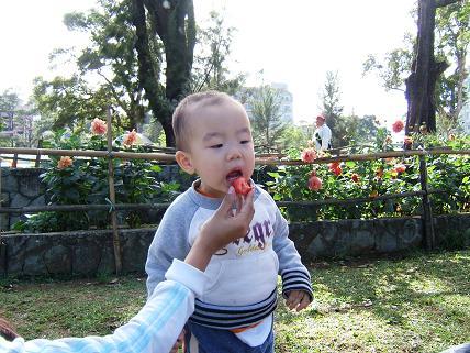 甘いイチゴです!