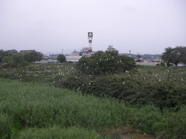 20090802 018b.jpg
