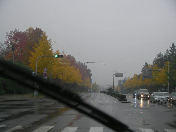 20081116 001b.jpg