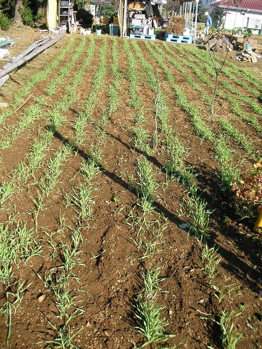 2011-11-26 20111126 009b.jpg