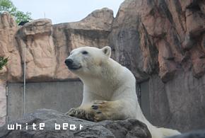 white bear.png