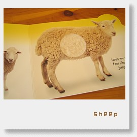 touch,feel and say sheep.jpg