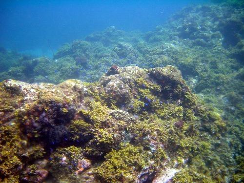 水中01.jpg