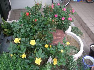 庭の花 2011 6月