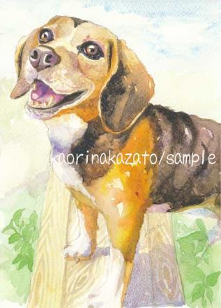 縮小ビーグル犬72dpi.jpg