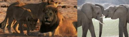 ライオンとゾウ.jpg