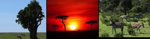 アフリカ.jpg