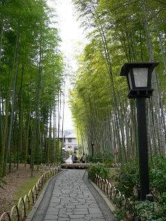 修善寺*竹林の小径.JPG
