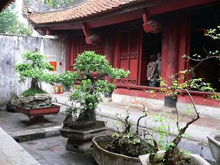 Hanoi*文廟_ベトナム式盆栽?.JPG