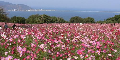 Shikanoshima view.JPG