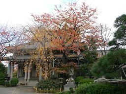 谷中*お寺さんの本堂と紅葉.JPG