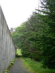 水の教会*コンクリート壁と森.JPG