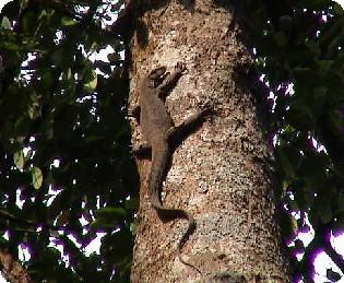モニさん木に登る