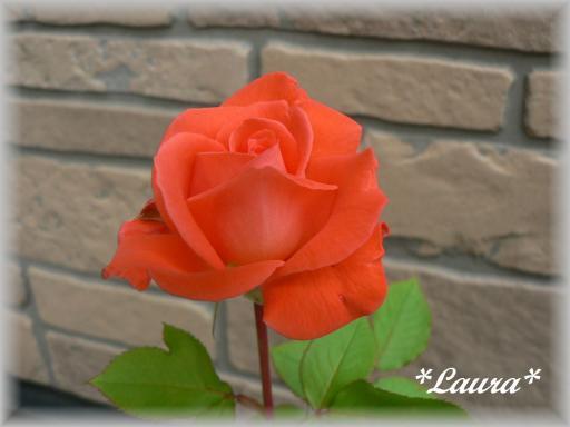 Laura5.28.jpg