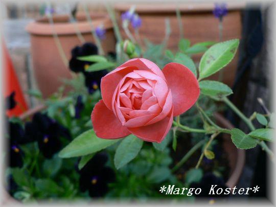 Margo Koster10.30.1.jpg
