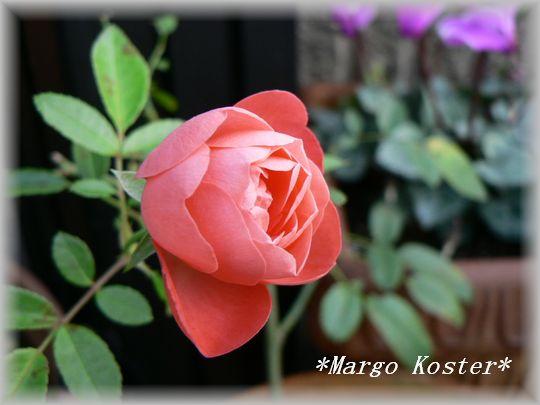 Margo Koster10.30.2.jpg