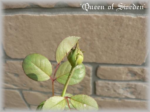 Queen of Sweden9.25.jpg