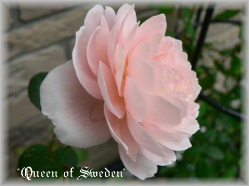 Queen of Sweden10.7.1.jpg