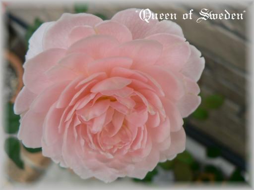 Queen of Sweden10.7.2.jpg